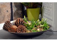 Lökväxter i skål