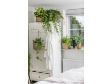 Alltid plass til en til - bruk planter også i små rom!