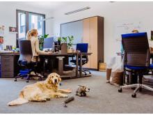 """In der Fressnapf-Unternehmenszentrale """"Alltag"""": Der Kollege Hund ist mit am Arbeitsplatz"""