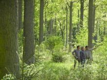Ekskogen på Visingsö