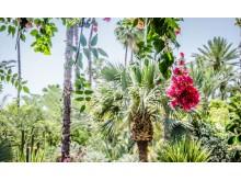 NOSADE Garden Time_Source istock_ID 82993773