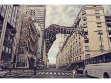 Fot. Jose Maria Perez, Argentina, Entry, Open, Enhanced, 2016 Sony World Photography Awards