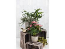 Krukväxter och krukor SS 2017