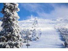 Snösäker skidåkning i januari