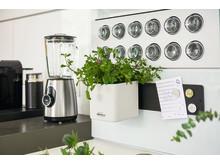 Modern und vielseitig: Das Green Wall Home Kit Color von LECHUZA