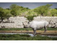 CS-301116-namibia_rx10-169