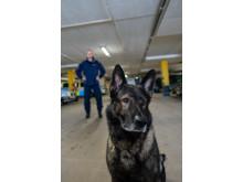 Årets polishund 2018 - Cross