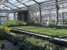 Plant breeding greenhouses