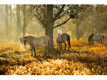 Morgonbete i Naturpark Barmin