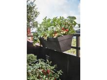 Milla balkonglåda med tomat  Plantagen