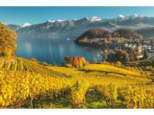 Blick vom Rebberg auf Spiez © Schweiz Tourismus_Fotograf Andreas Gerth