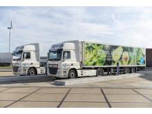 Albert Heijn-transportörerna Simon Loos och Peter Appel Transport är redo att använda ellastbilar från DAF för leveranser till stormarknader.