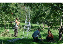 Frukträdsbeskärning