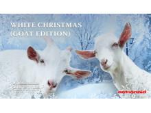 ActionAid hyllar geten i årets viktigaste julskiva