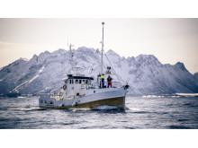 Zu Jahresbeginn fängt Nordnorwegens Fischereiflotte den Skrei