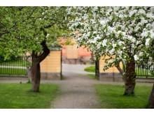 Svindersviks trädgård, foto Peter Segemark, Nordiska museet