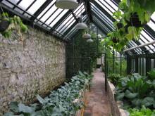 älskad odling i ditt eget växthus