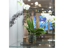 Orkidé av Thomas Rschke