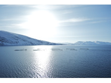 Beste Bedingungen für besten Lachs: das kalte, klare Meer Norwegens.