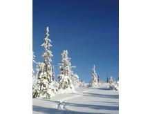 Hytte på fjellet_langrennsspor og natur i vinterprakt