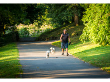 WALKIES: A walker and his dog enjoy the summer sunshine in Heywood's Queen's Park
