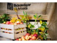 Skördedagar ARlanda_äpplen
