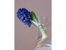Hyacint i vas