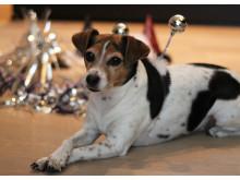 Lydtræning med hunden kan hjælpe til en bedre nytårsaften