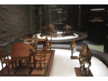 Exponat im Froschmuseum