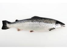 Saumon de Norvège