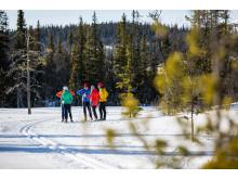 Längdskidåkning tillsammans  - Cross-country skiing