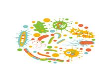 Digestive health image