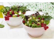Sommersalat med rips og stikkelsbær