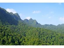 Regnskog på Borneo