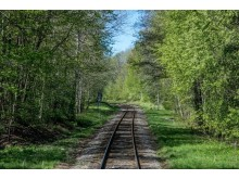 Sveriges vackraste tågresa bild 7  -  skogsbild