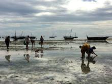 AIFS Freiwilligenprojekte auf Sansibar