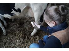 """""""mamelle"""", Messgerät zur Diagnostik von Euterentzündungen bei Milchkühen, von Janina Hünerberg,"""