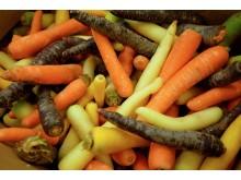 Gulerødder tre farver