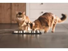 Trinkende Katzen - wie der Stubentiger genügend trinkt, erfahren Sie im Ratgeber