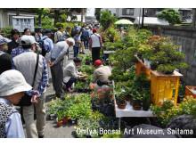 Omiya Bonsai Festival(1)