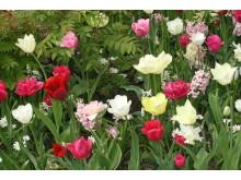 Blomsterbed med løkblomster er selve definisjonen av vår
