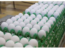 Laitilan Kanatarhan kananmunia Munax Oy:n tiloissa