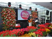 Nea uppträder på Blomsterfrämjandets och MixMegapols tulpankonsert