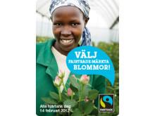 Välj Fairtrade-blommor på alla hjärtans dag