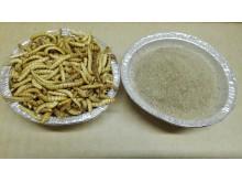Mjölmask råvara i proteinpulver