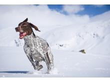 Hunden Cooper - Sofia Henrikssons träningskompis som ofta hamnar på bild.