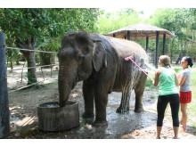 Frivilligt arbejde med dyr i Thailand