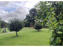 Forenede Service støtter op om tiltaget 'Danmark planter træer'