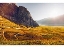 Walliser Weinweg