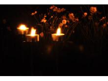 Ljusstämning på Sofiero